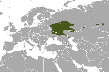 Russian Desman Wikipedia