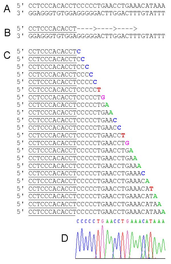 Przykładowe sekwencje DNA