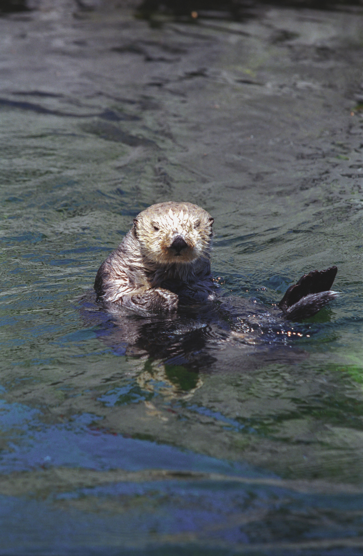 Vancouver Aquarium Sea Otter Encounters Party