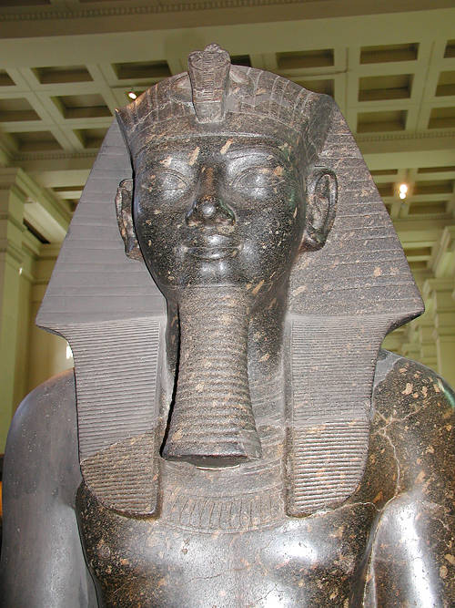 British Museum Of Natural History Internship