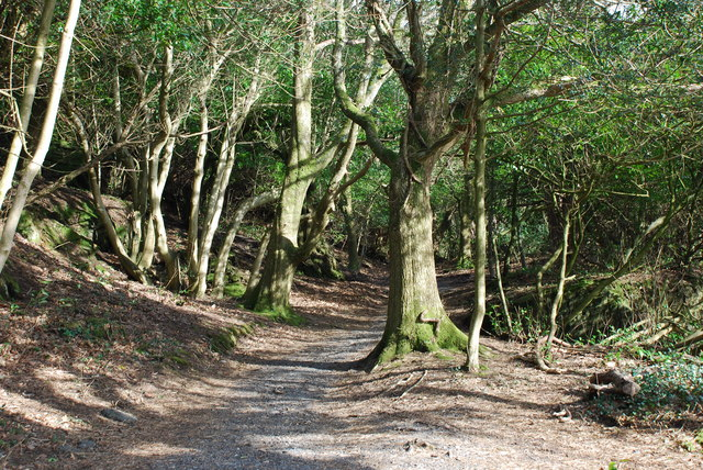 Y Gwyllt Portmeirion The Wild Wood - geograph.org.uk - 708262