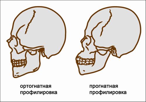 Происхождение русских с точки зрения антропологии