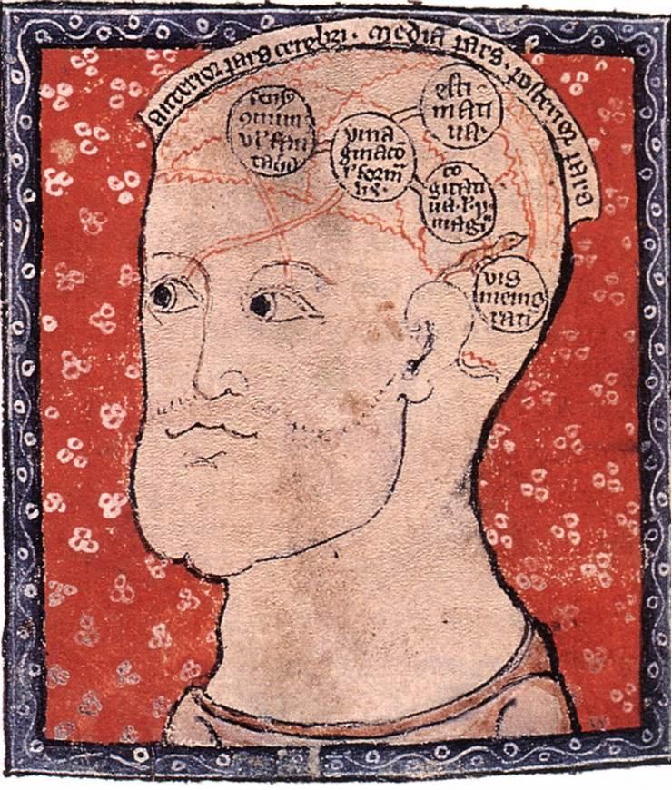 File14th Century Painters Diagram Of The Brain Wga15761g