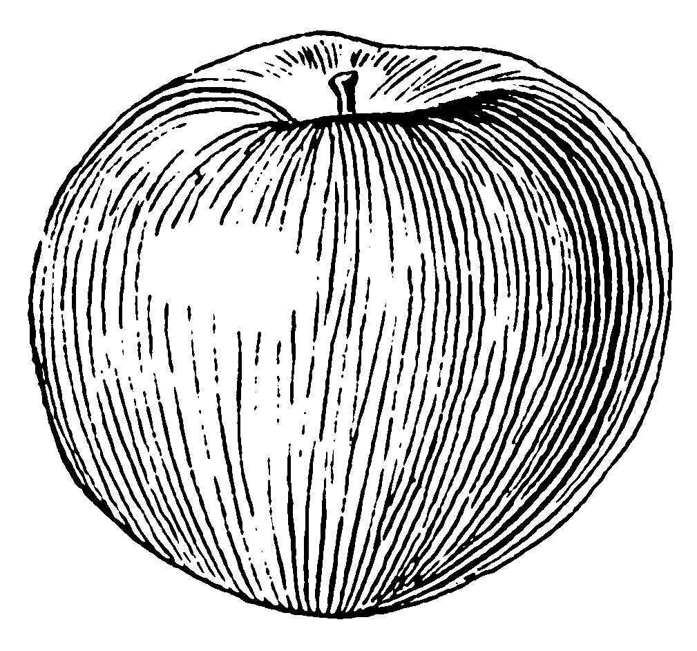 History Of Contour Line Drawing : File apple psf wikimedia commons