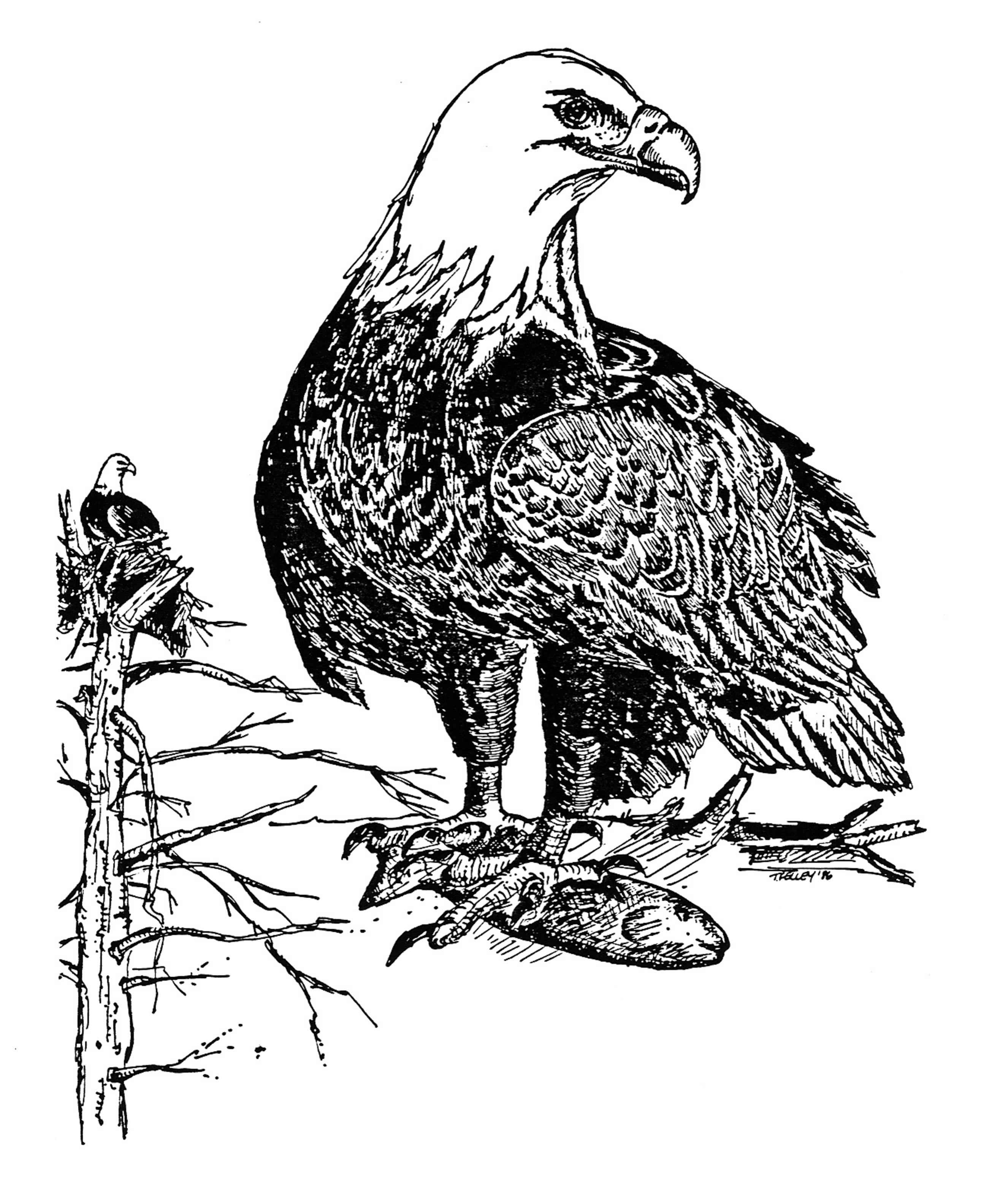 Image Result For Eagle Head Coloring