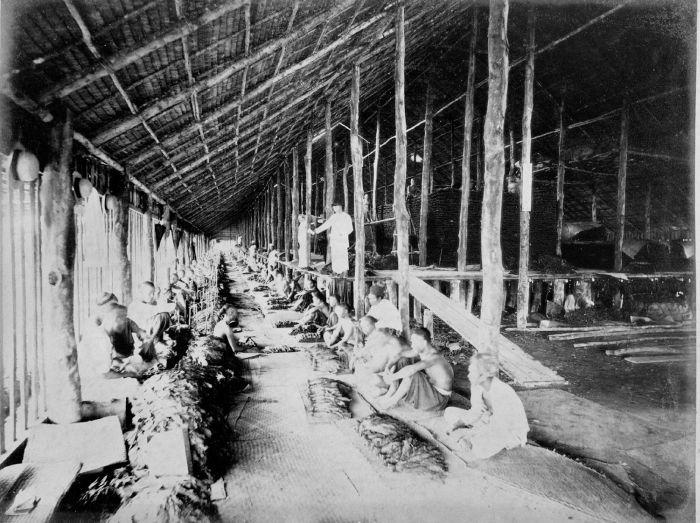 filecollectie tropenmuseum rijen koelies sorteren tabak