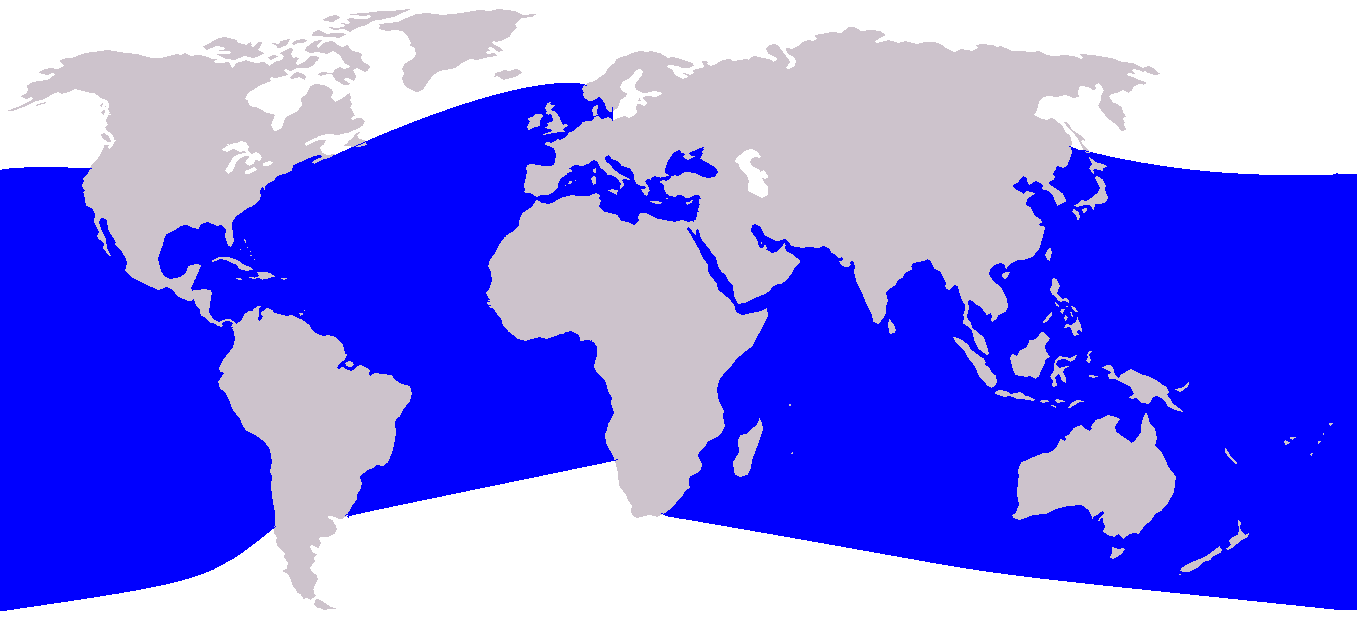 Common Bottlenose Dolphin Tursiops truncatus canary islands canaries atlantic ocean delphinidae cetacea cetaceans range map