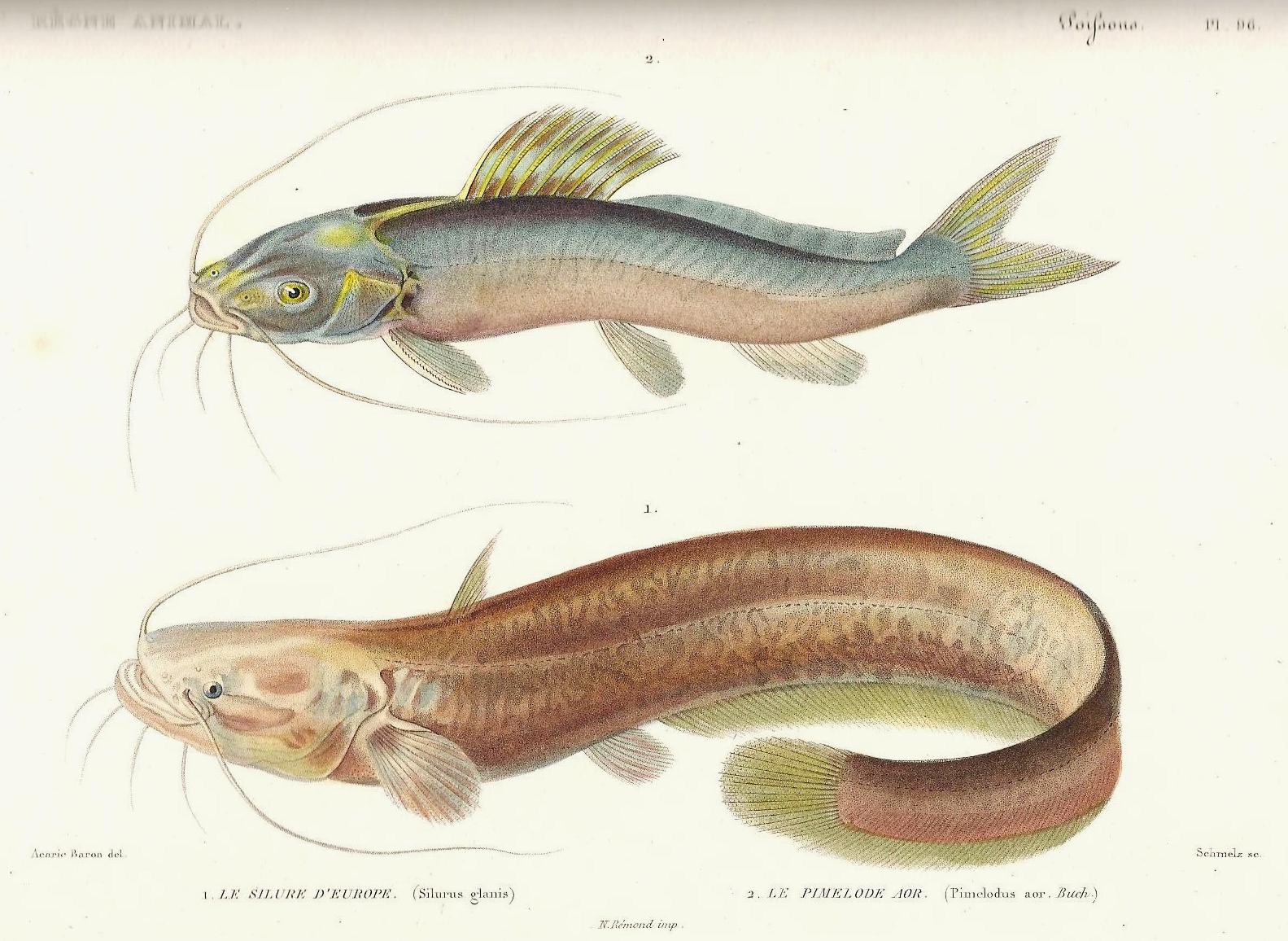 Léquipement pour la pêche dhiver