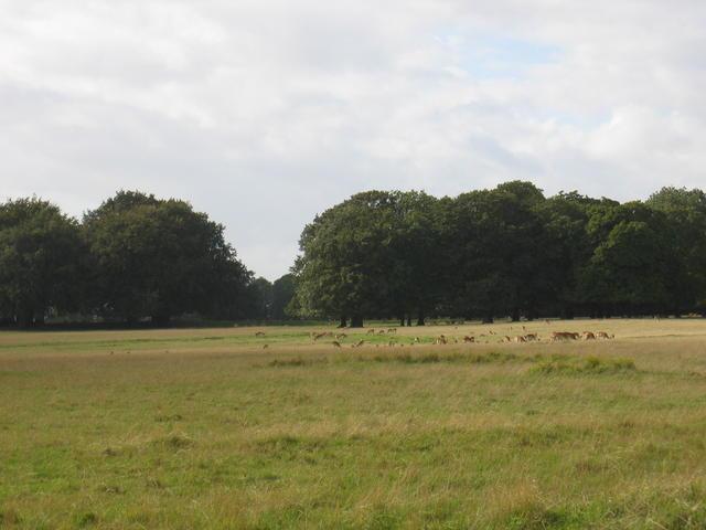 Deer in Great Barrington Park - geograph.org.uk - 233806