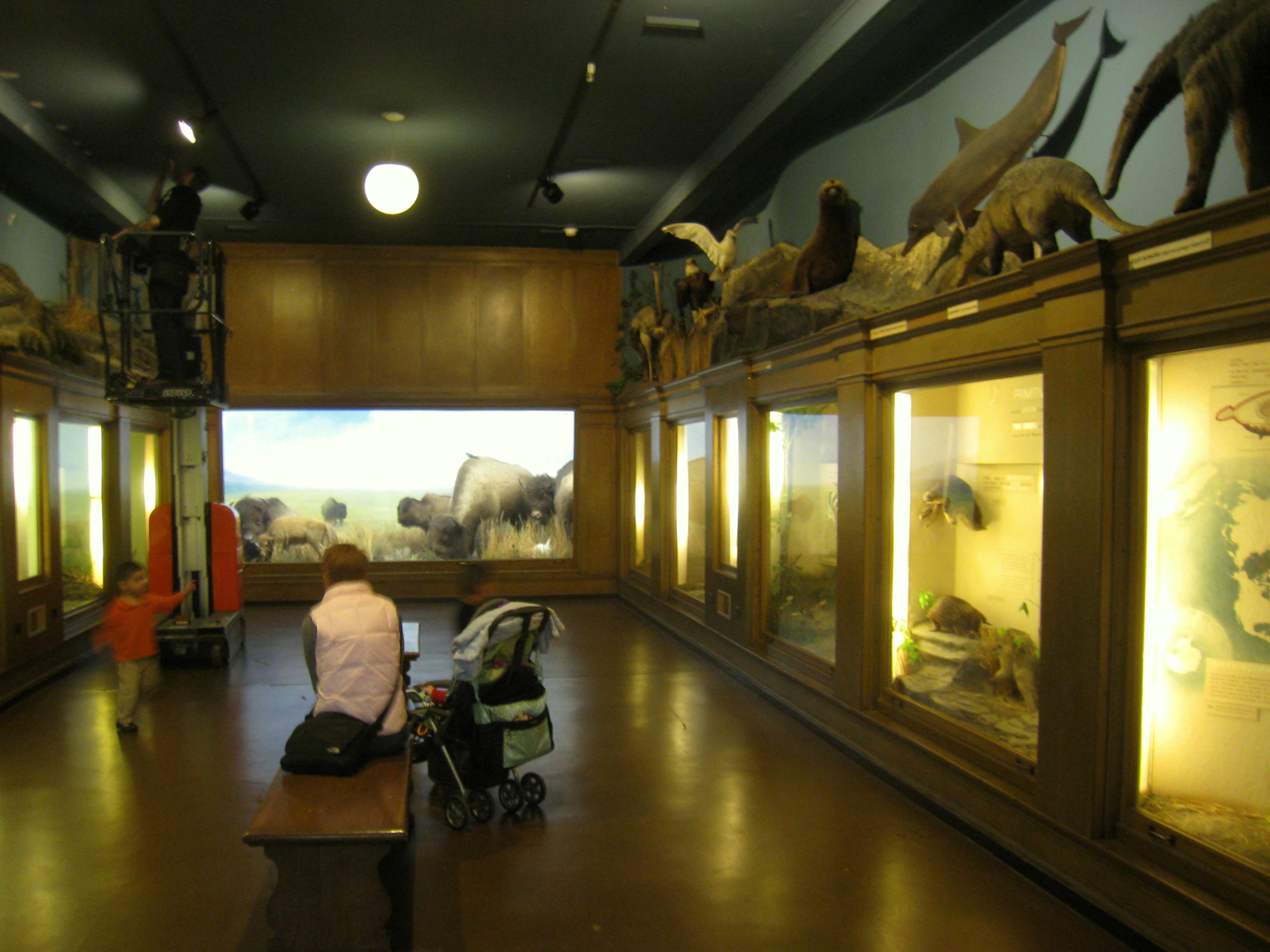 History Natural Museum New York