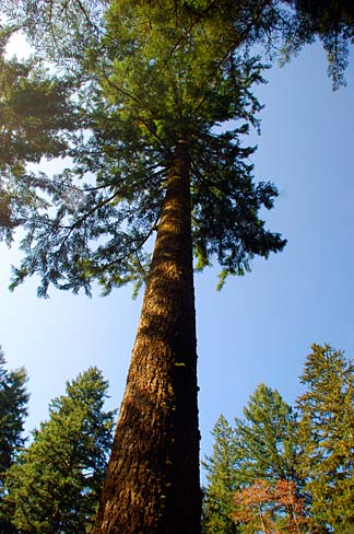 Dying Trees Can Send Food To Neighbors Of Different Species