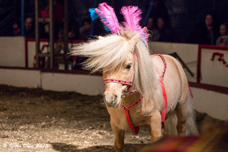 File:Eroni S Circus 03 08 2013 (43202954).jpeg - Wikimedia Commons