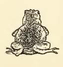 File:Frog Drawing.jpg