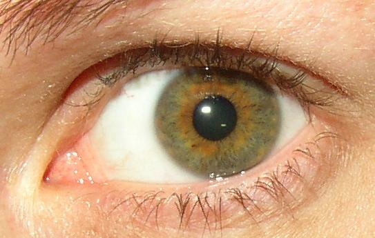 Hazel_eye.jpg