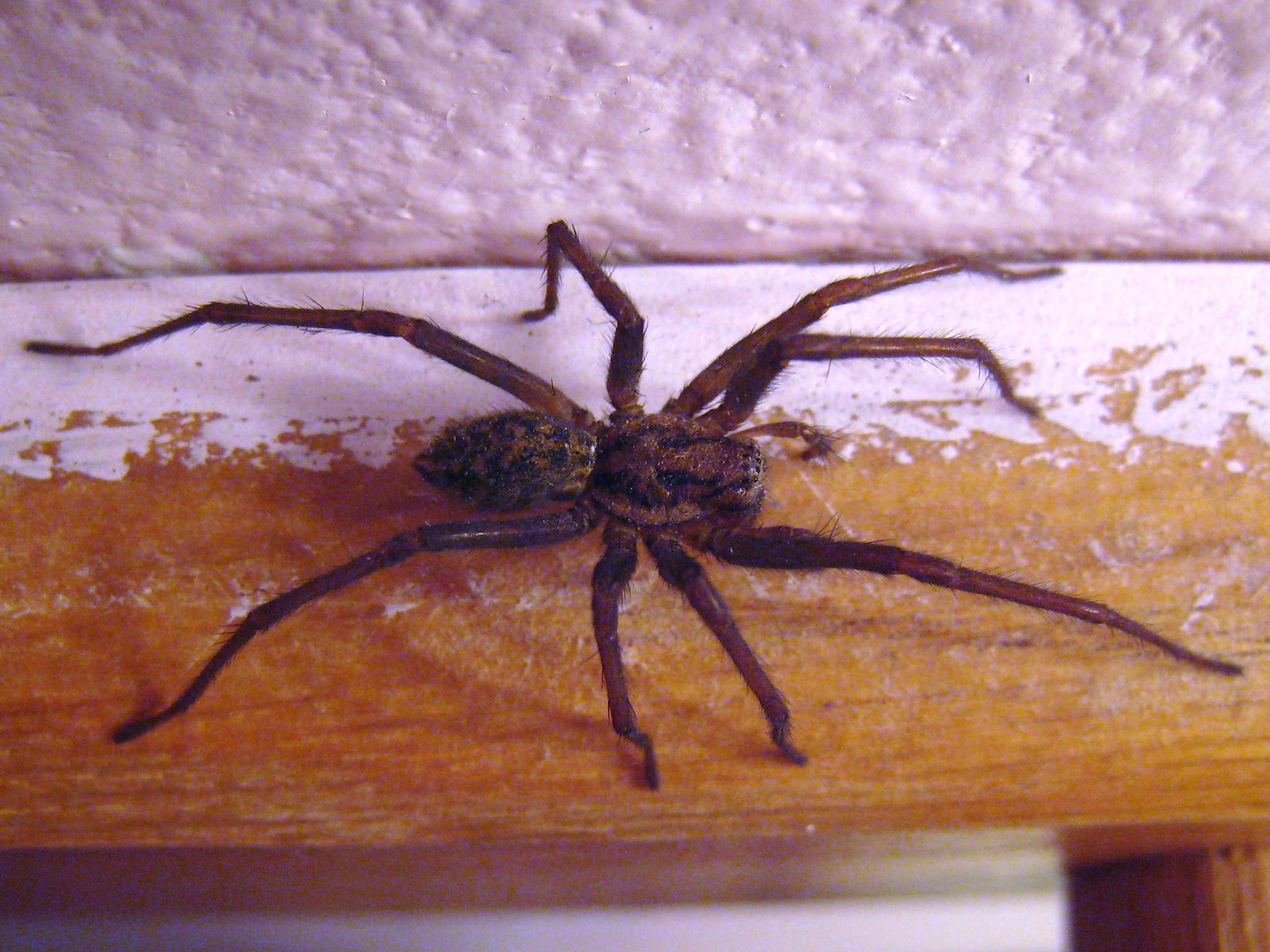 Giant Spider House Decoration