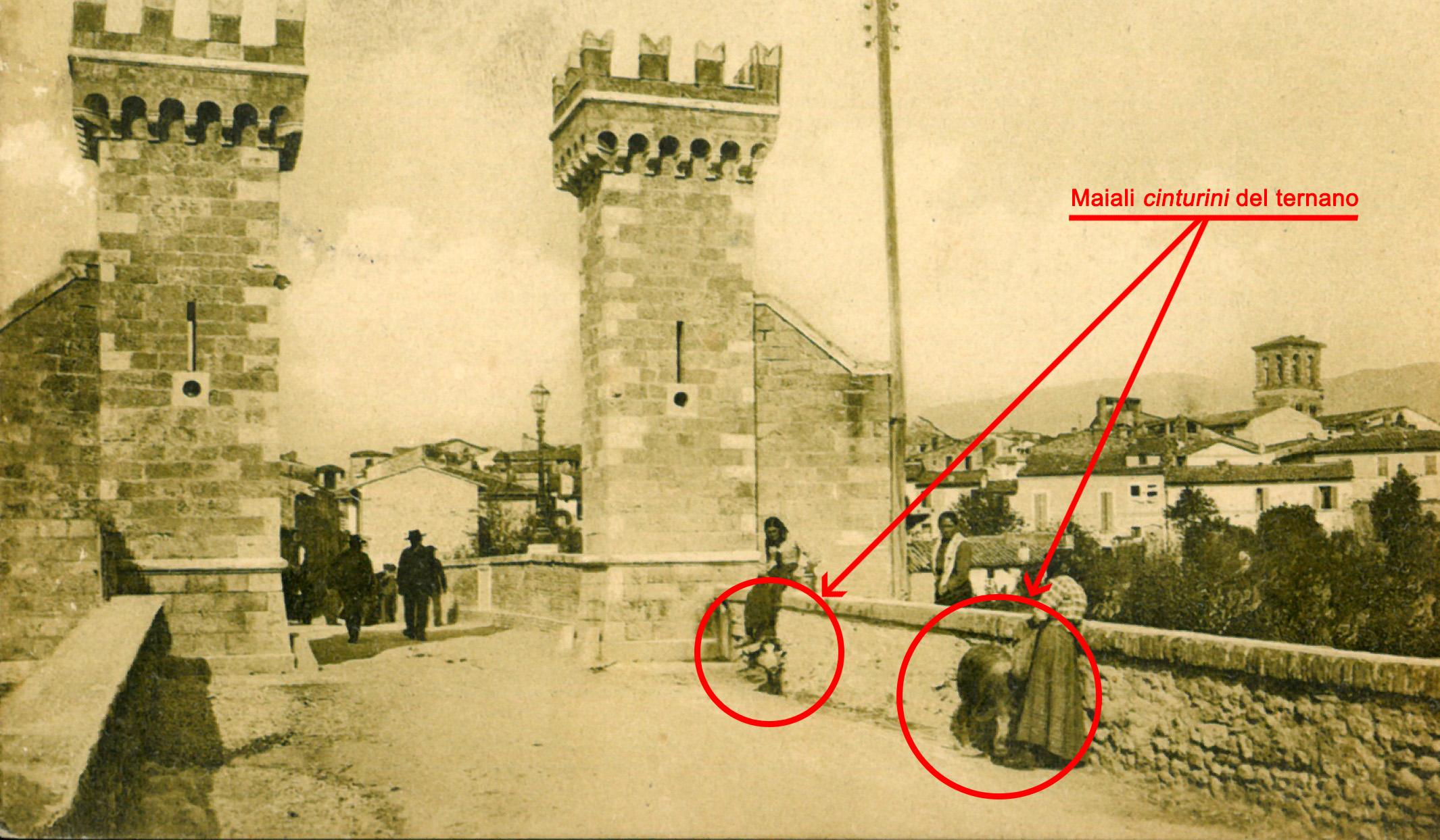 Maiali Cinturini a Porta Garibaldi Terni cartolina dei primi del 900