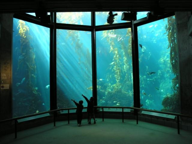 Gallon Glass Fish Tank