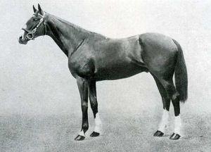 Neil Gow British Thoroughbred racehorse