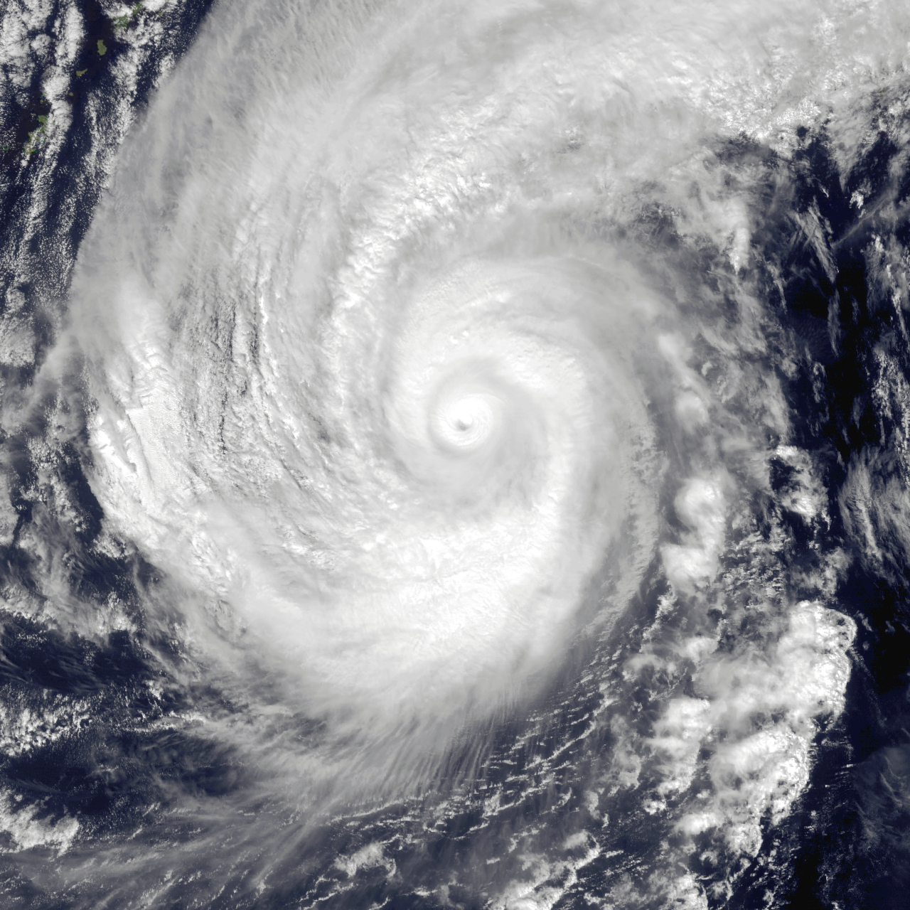 тайфун нури фото всевозможных цветочных