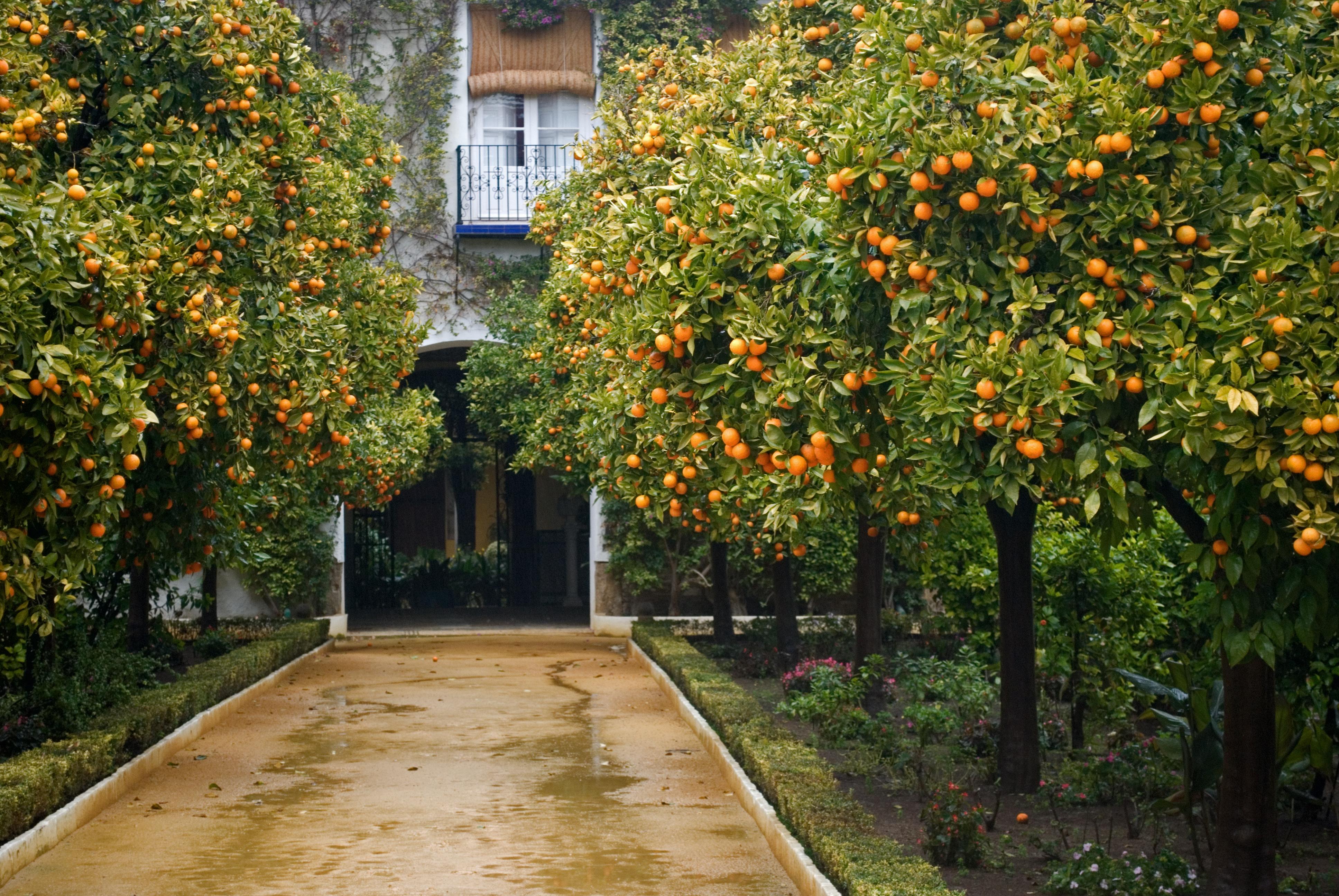 Orange Blossom Gardens And Villa Chords