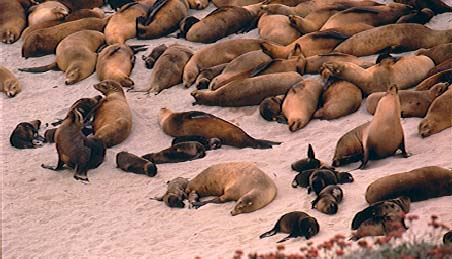 File Sea Lion Beach Jpg
