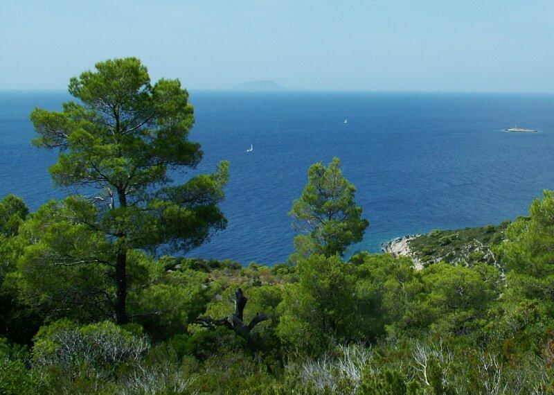 Vis (island)-pines