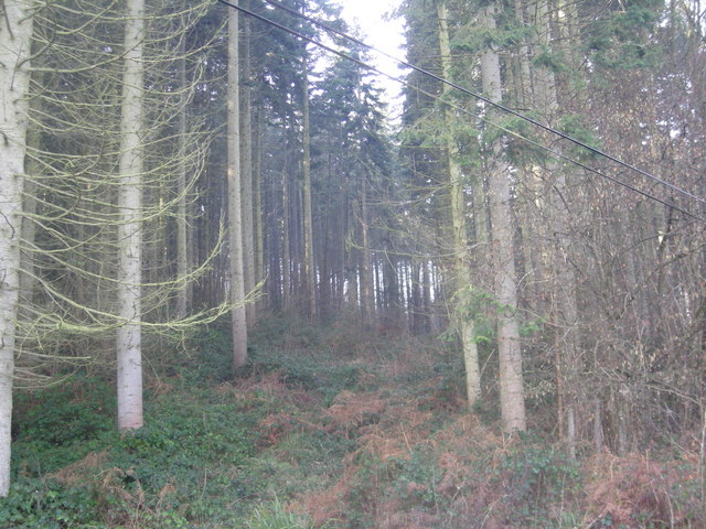 File:Woodland known as 'The Wilds' - geograph.org.uk - 685286.jpg