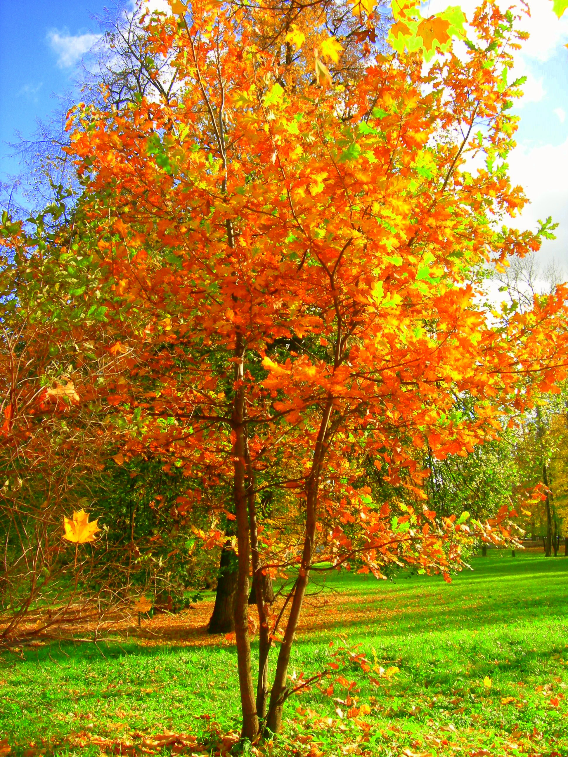 Description осень в грачёвском парке jpg