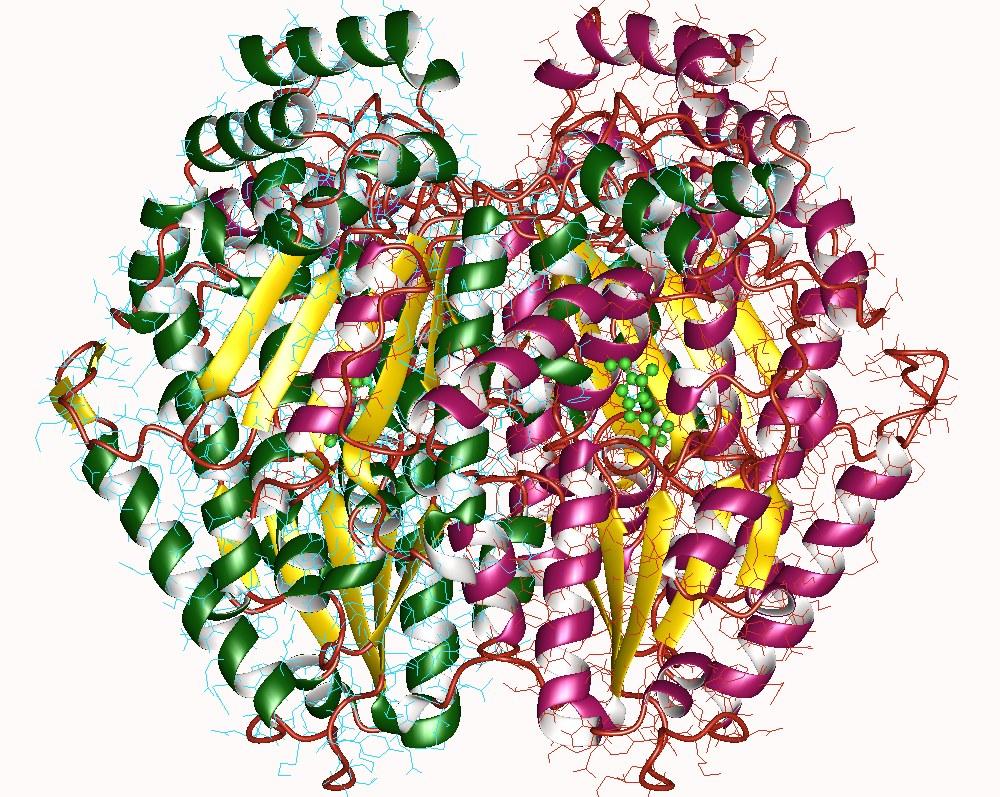 Glucose-6-phosphate Isomerase