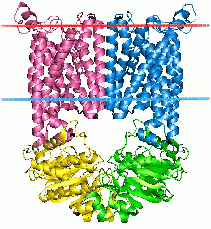 ATP-binding cassette transporter - Wikipedia