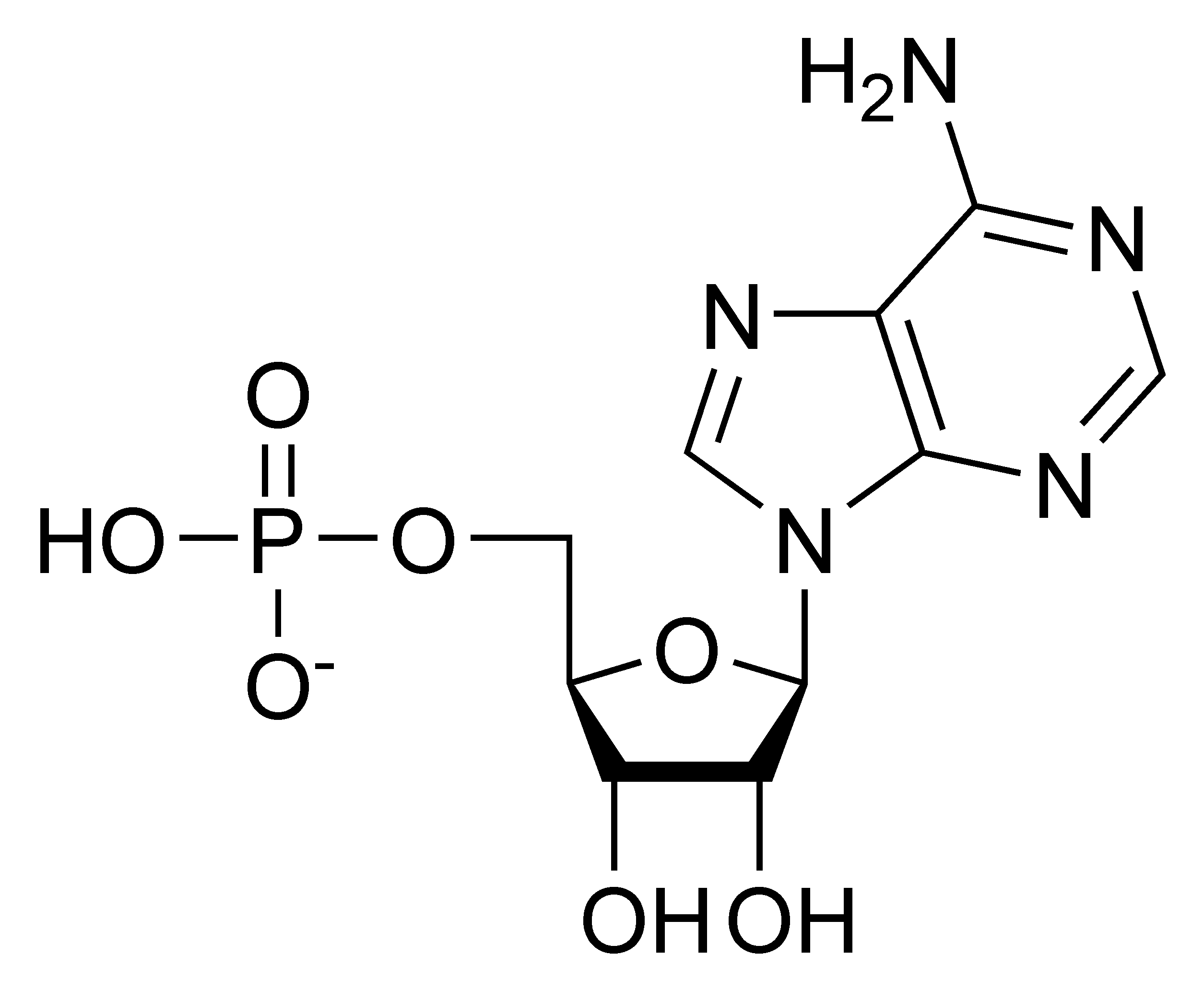 Chemical structure of adenosine monophosphate