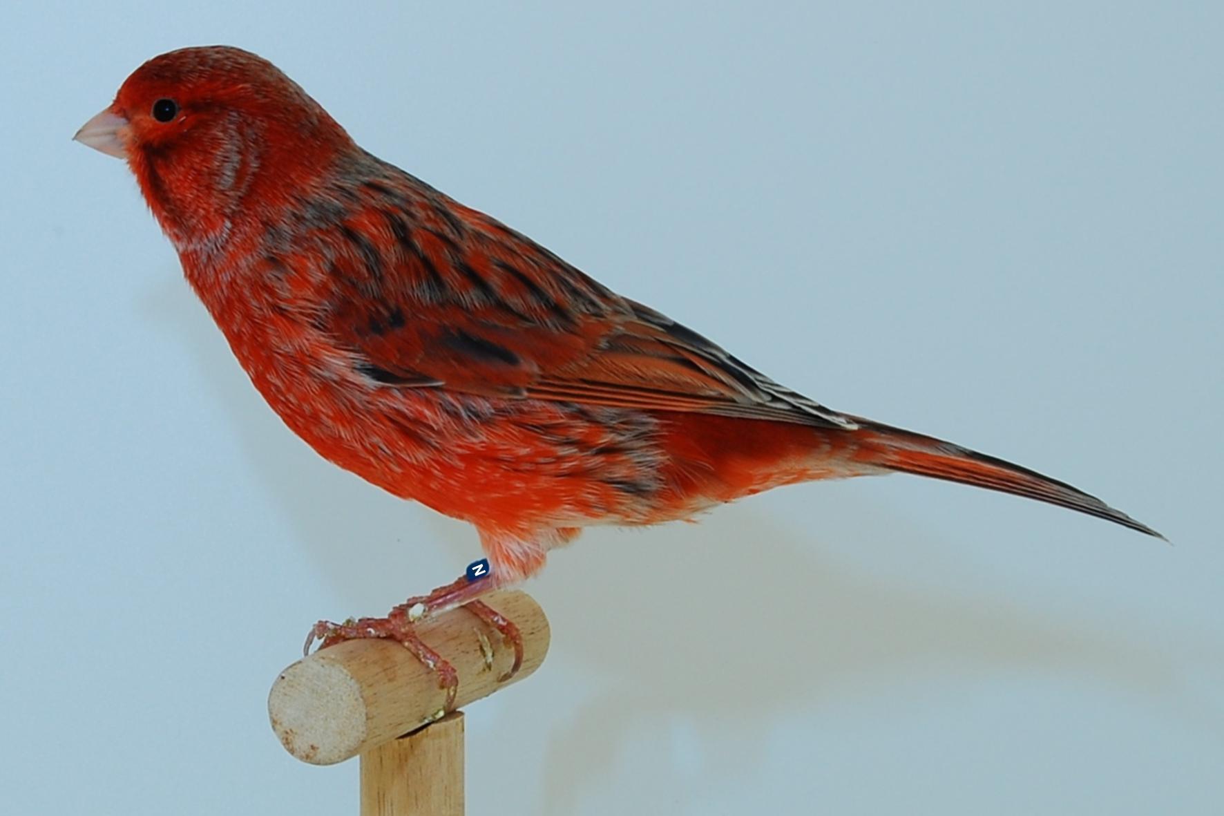 Fabulous Datei:Achat rot schimmel.jpg – Wikipedia BK69