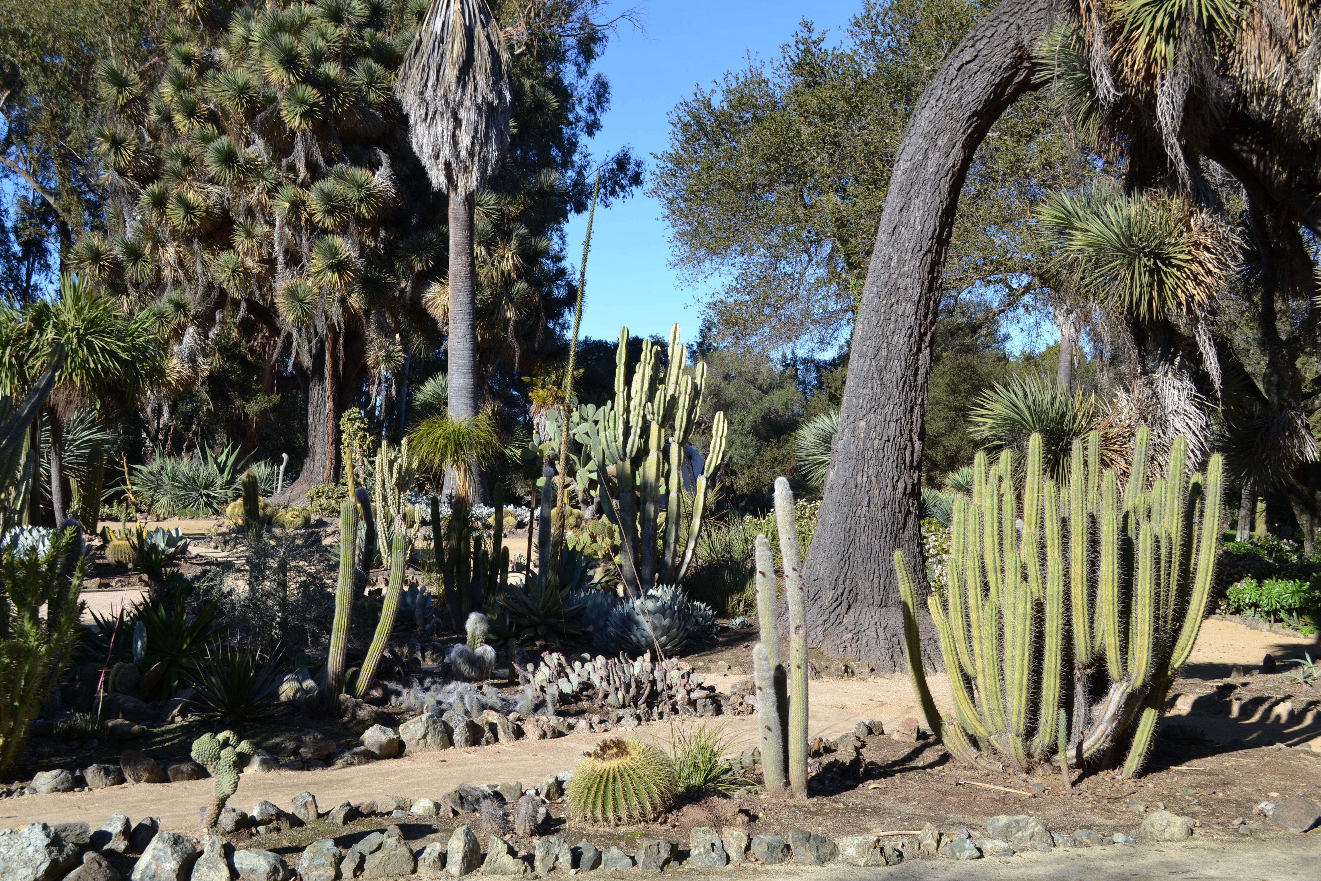 Merveilleux File:Arizona Cactus Garden At Stanford University 1.JPG