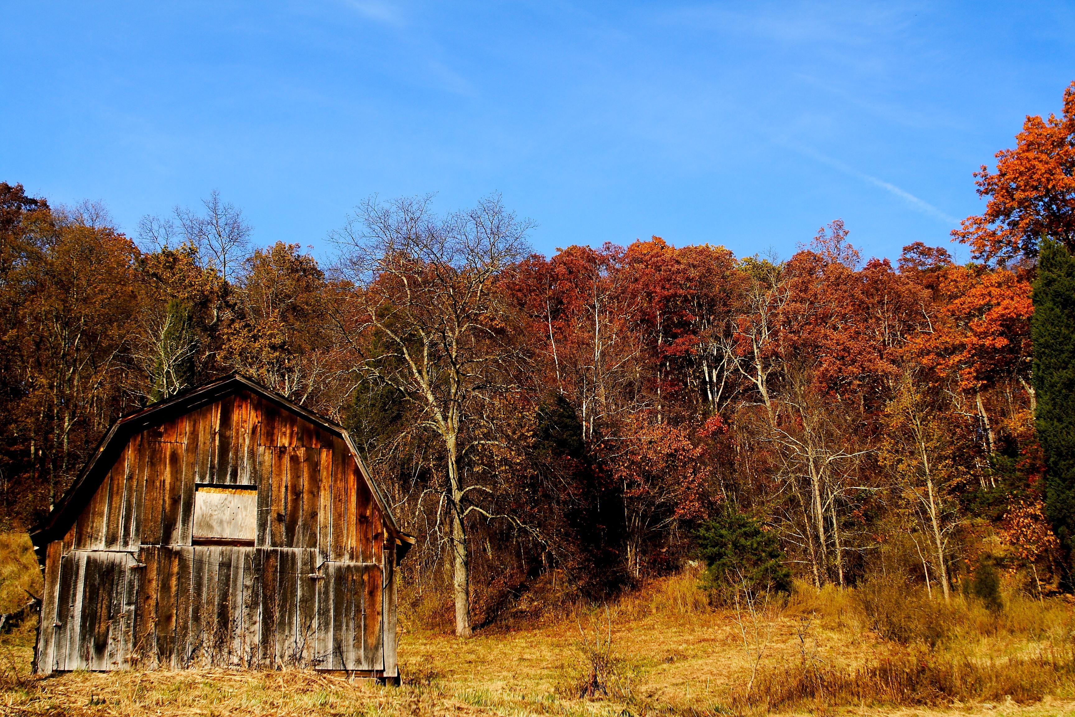 Description Autumn cou...
