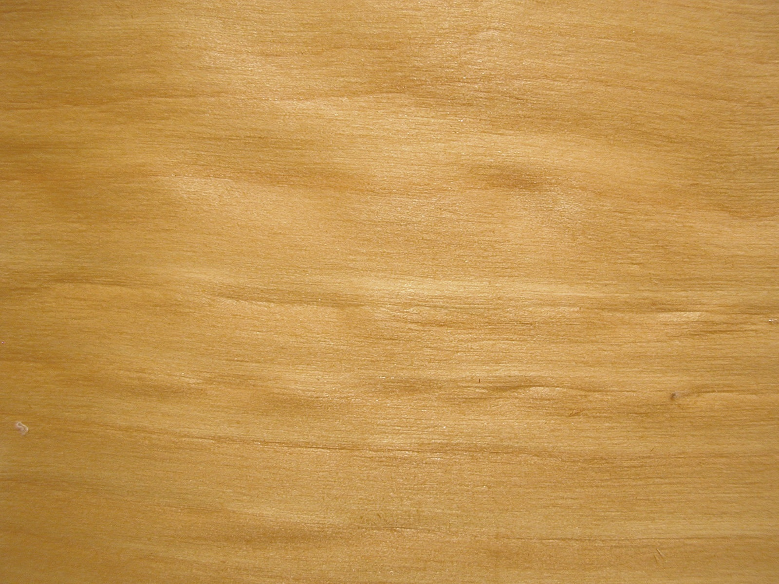 Holz Birke file birke holz jpg wikimedia commons