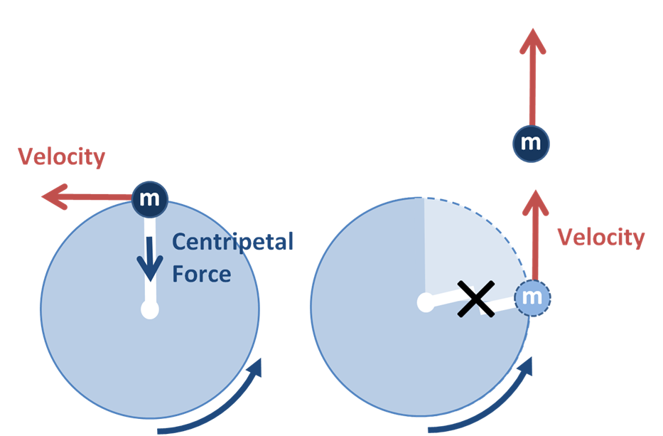 A ball moves in a circle. The tangential velocity is indicated by an arrow perpendicular to the radius of the circle, in the direction the mass moves at the current moment. The centripetal force points toward the center of the circle. A second diagram shows the centripetal force is removed and the mass moves off in a straight line, in the direction it was moving the instant centripetal force was removed.