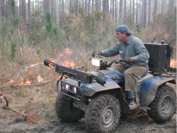 Firing the woods in a South Carolina forest with a custom made driptorch mounted on an ATV. The device spits flaming fuel oil from the side, instantly igniting the leaf litter.