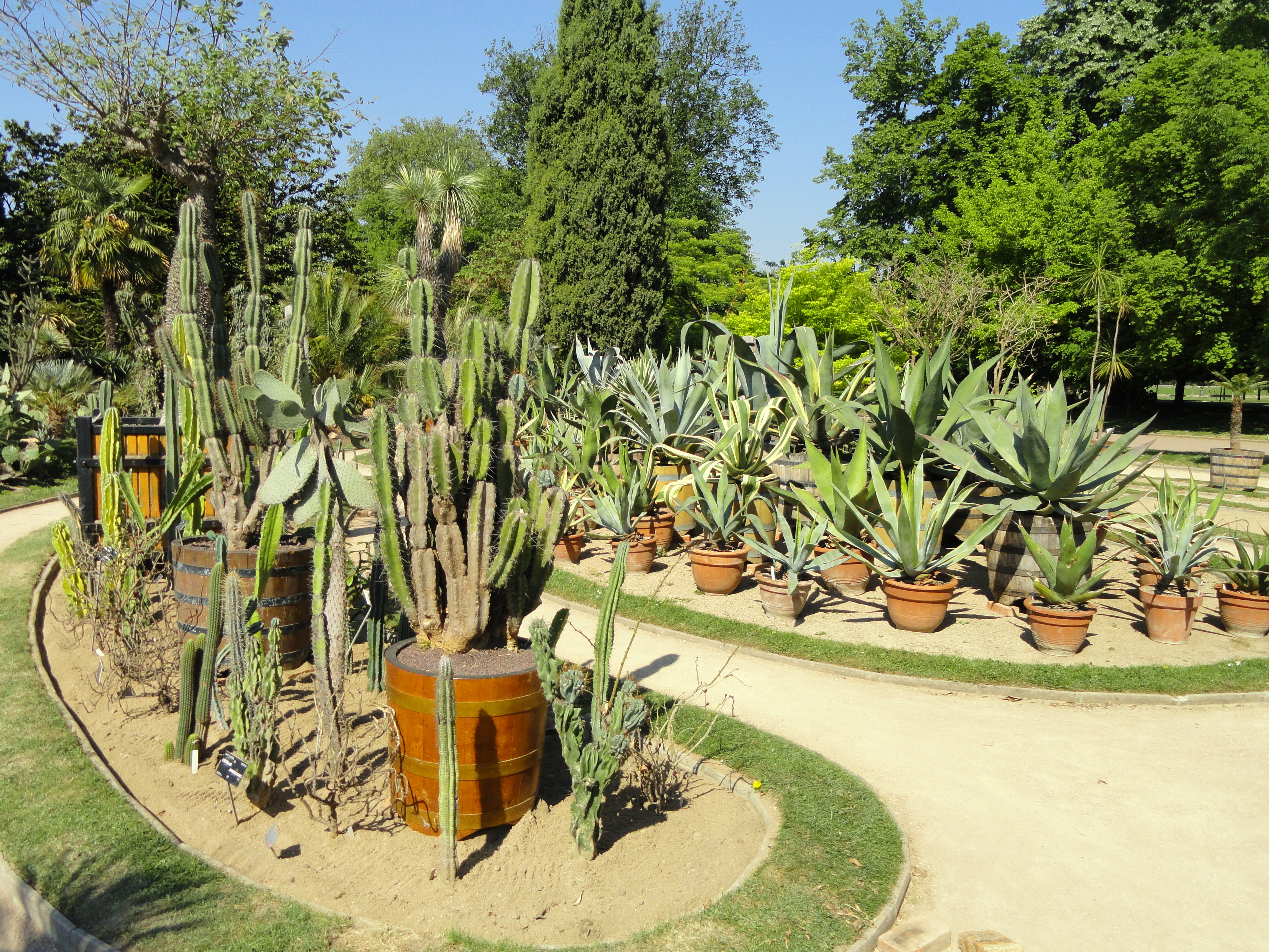 Jardin cactus awesome exotic exot spur imposing costa for Jardines con cactus