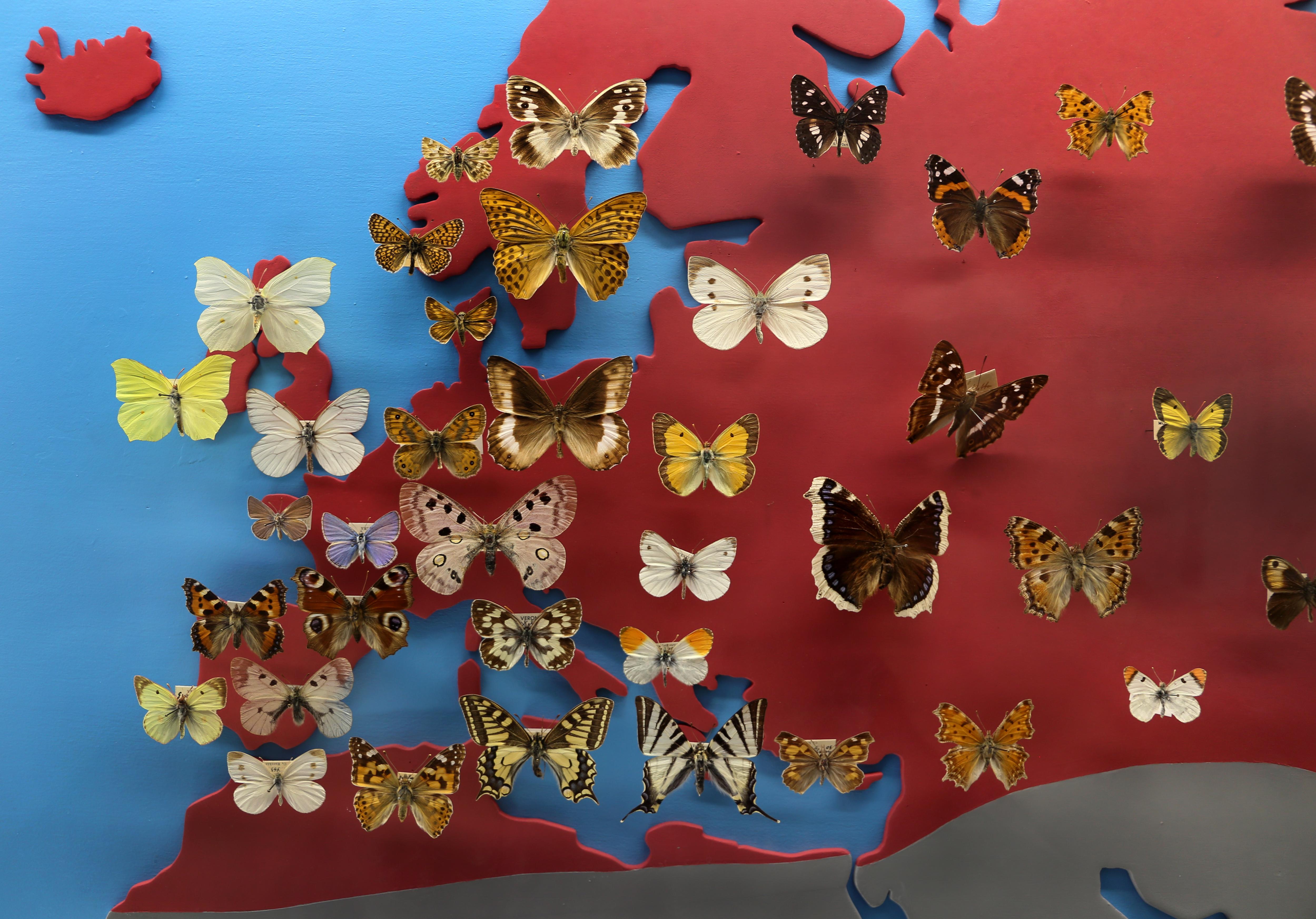 Cartina Mondo Wiki.File Cartina Geografica Con La Presenza Di Farfalle Nelle Varie Zone Del Mondo Europa E Mediterraneo Jpg Wikimedia Commons