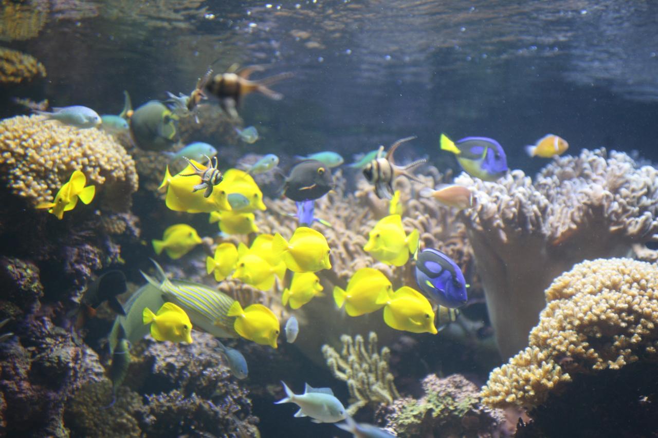 Spoločenstvo koralového útesu