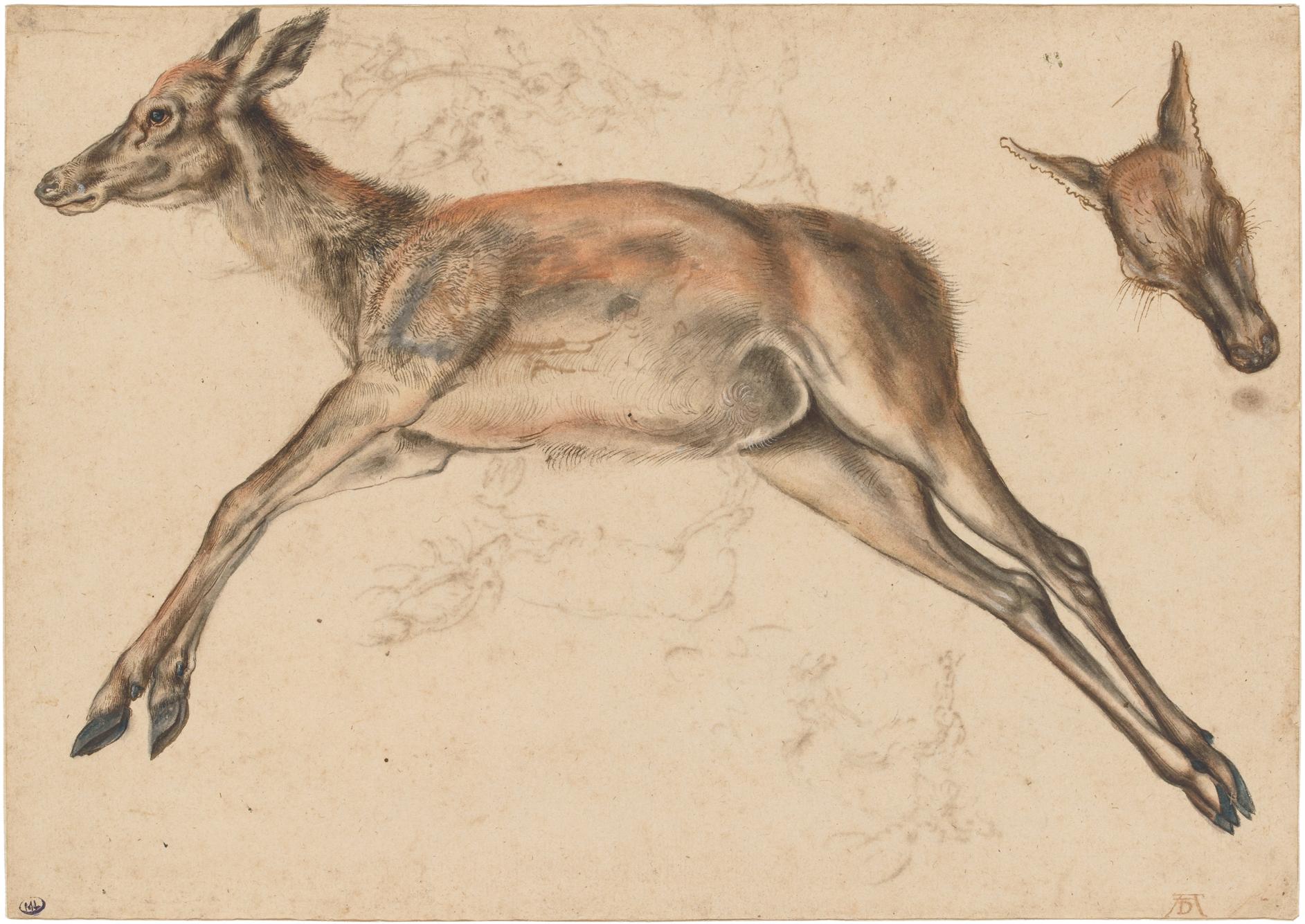 File Cranach Animal Sketch Jpg Wikimedia Commons