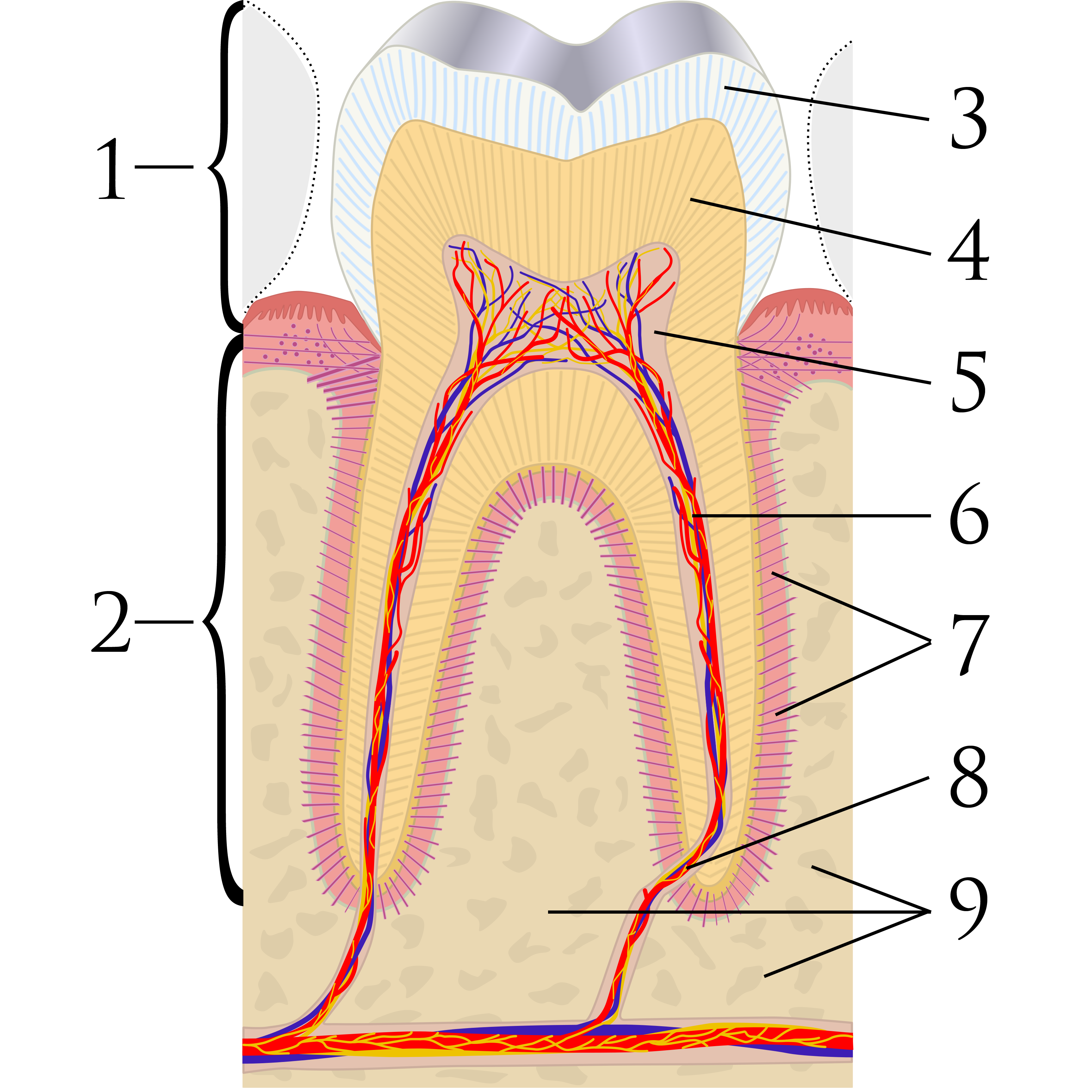 Image Result For Free Printable Dental