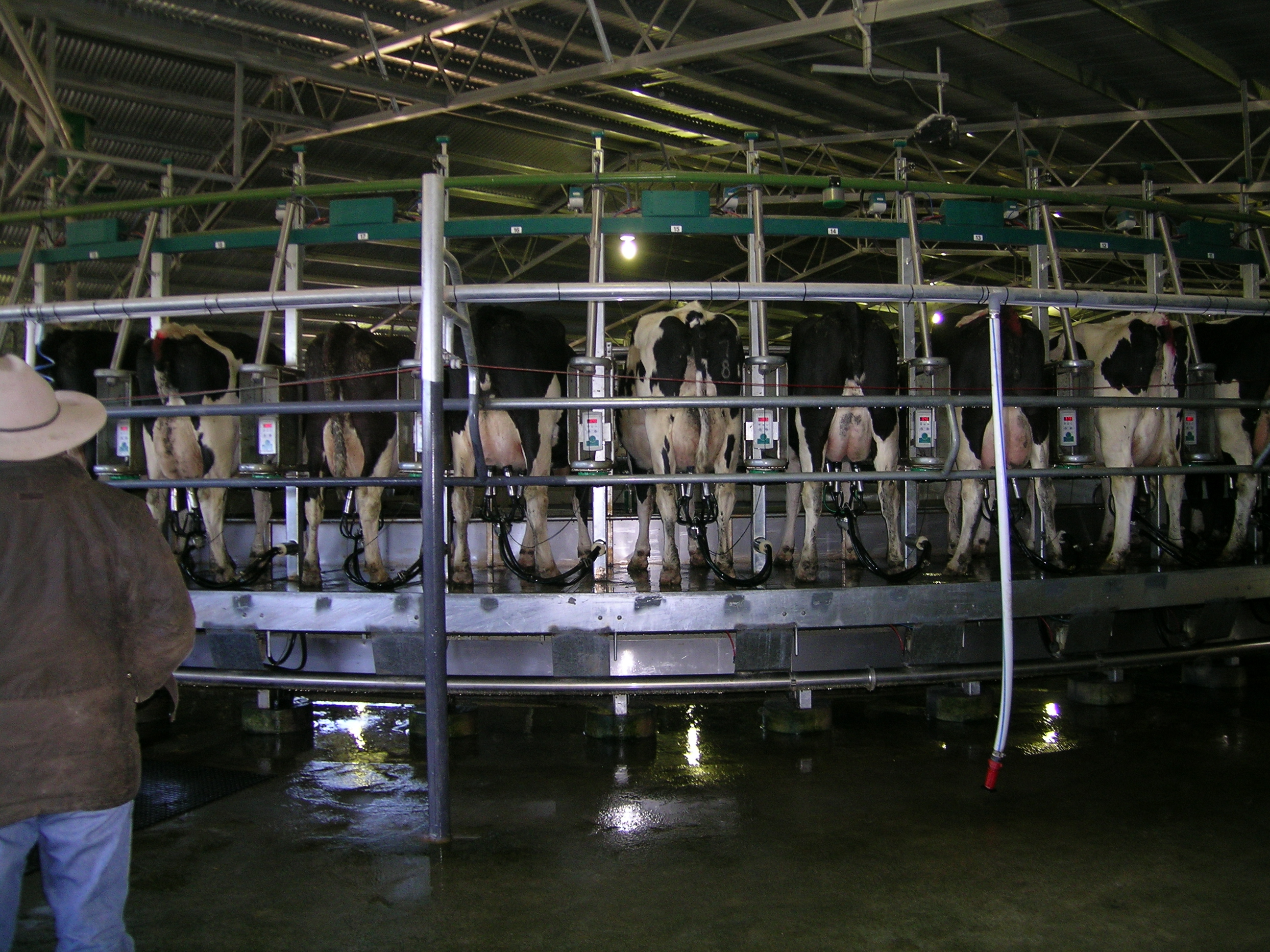 https://upload.wikimedia.org/wikipedia/commons/f/ff/Dairy_NSW.JPG