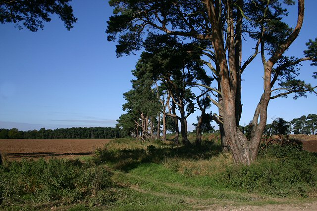 File:Field boundary on the Elveden Estate - geograph.org.uk - 545934.jpg