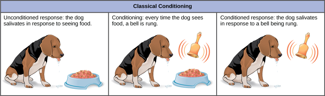 Dog Food Cognitive Dysfunction