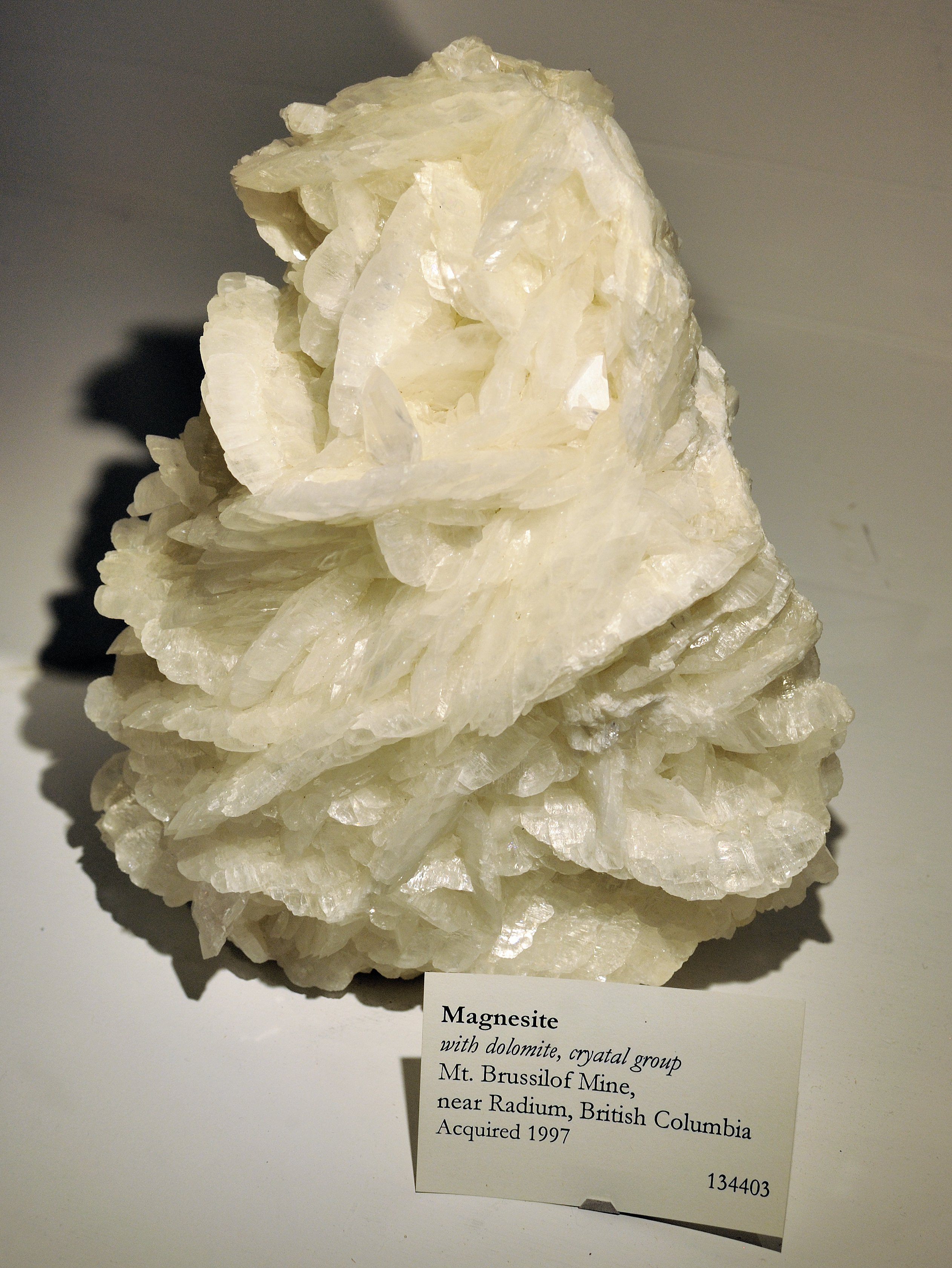 British Museum Natural History Publications