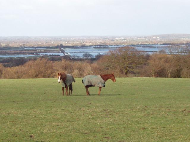 Horses in field, flooded Otmoor beyond - geograph.org.uk - 351043