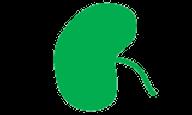 Forme des feuilles, réniforme, (Arrondie et en forme de rein)
