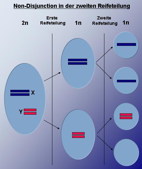 XYY syndróm  Syndróm supermuža  Genetické syndrómy