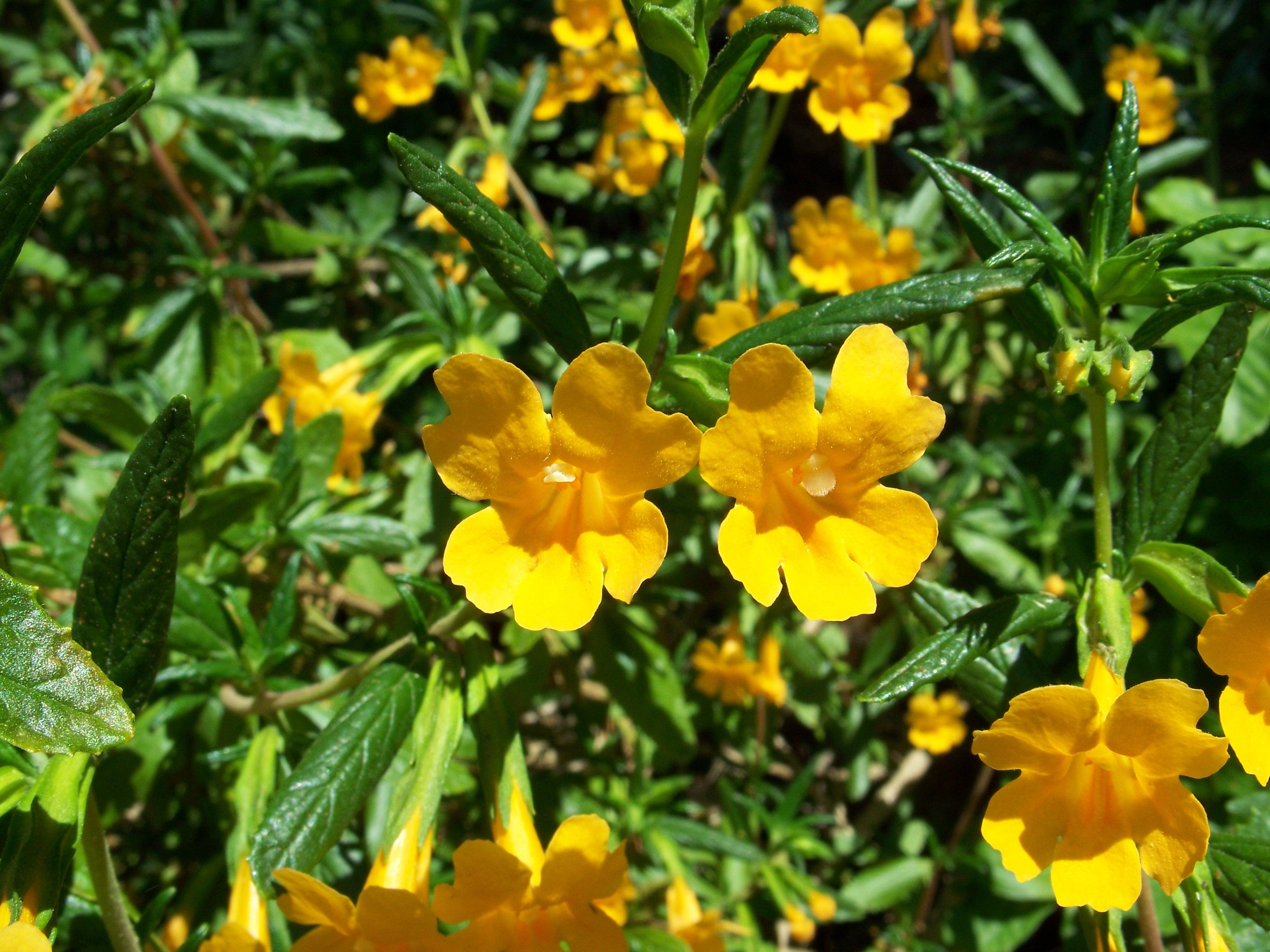 Bush Plants With Flowers